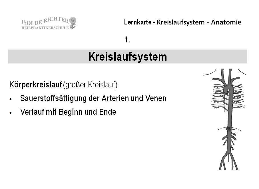 Kreislauf Lernkarten - Ausbildungsbedarf für Heilpraktiker Iris Richter