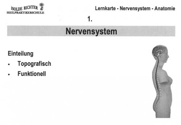 Nervensystem Lernkarten - Ausbildungsbedarf für Heilpraktiker Iris ...