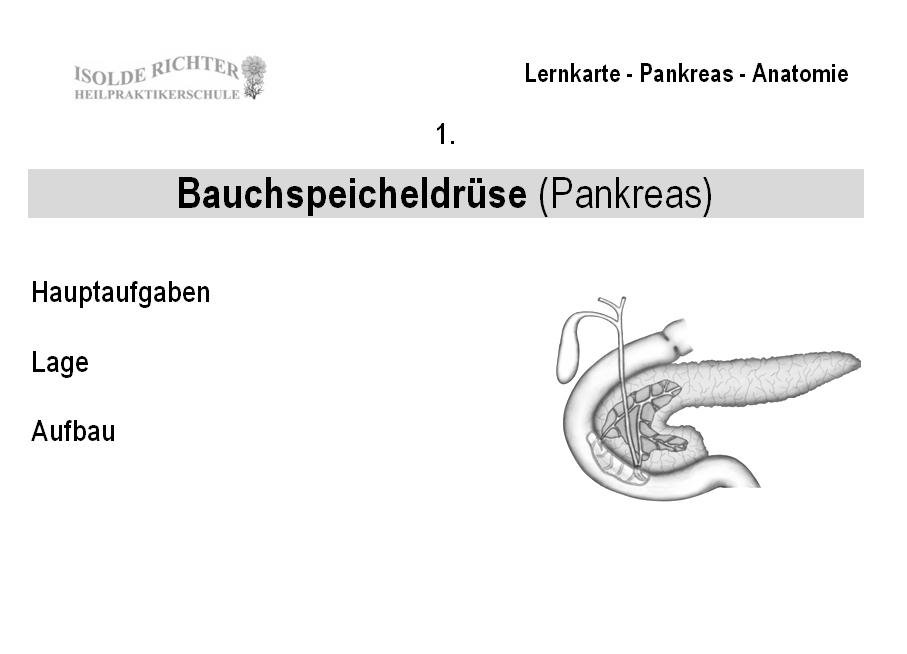 Niedlich Makroskopische Anatomie Der Bauchspeicheldrüse ...